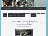 Chatterie Eternitéphémère : chat norvégien